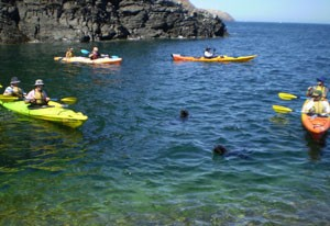 Kayaking with seals at Rapid Bay
