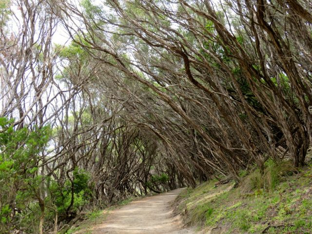 One of the trails at Wilson's Promontory National Park