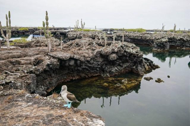three days on isla isabela galapagos islands los tuneles