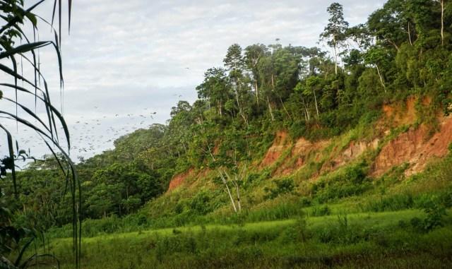 amazon rainforest tambopata research centre peru