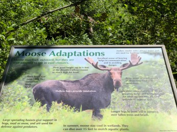 Moose Adaptations