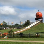 Pumpkin Village Fall Fest at Leesburg Animal Park