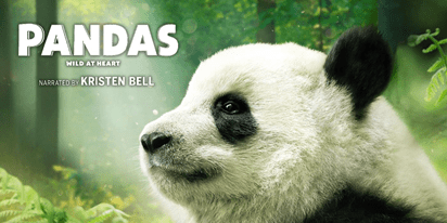 """Pandas,"" a documentary, will be on view June 1 through Aug. 31, 2019 at Smithsonian's National Zoo."