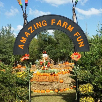 Fall Pumpkin Festival 2019 at Amazing Farm Fun