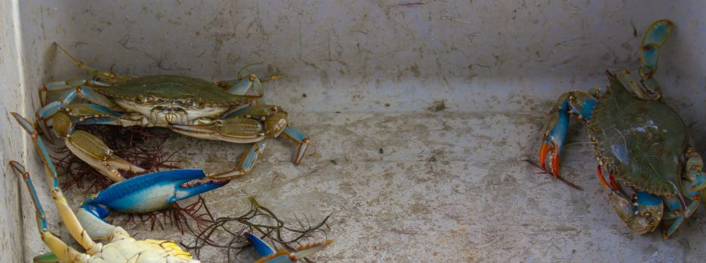 Captain Barry crabs