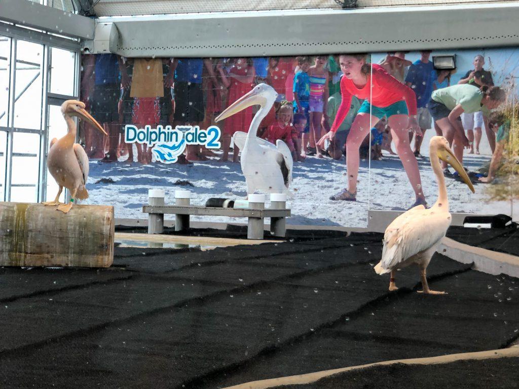 CMA Pelicans
