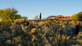 Taliesin West at Sunset in Spring