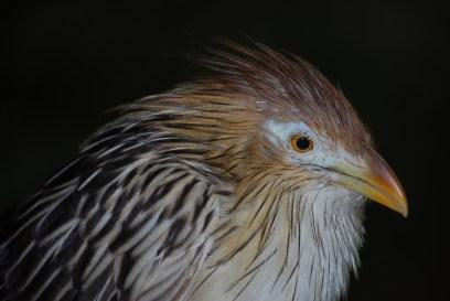 Cuckoo! - Dallas World Aquarium, Texas