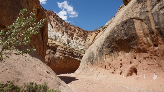 8 Aug 2015 Capitol Reef National Park (58) copy