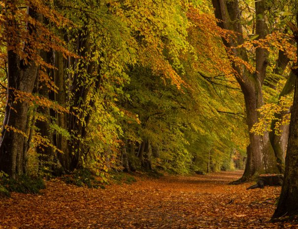 Lady Marys Walk - Creiff  (©Leading Lines)