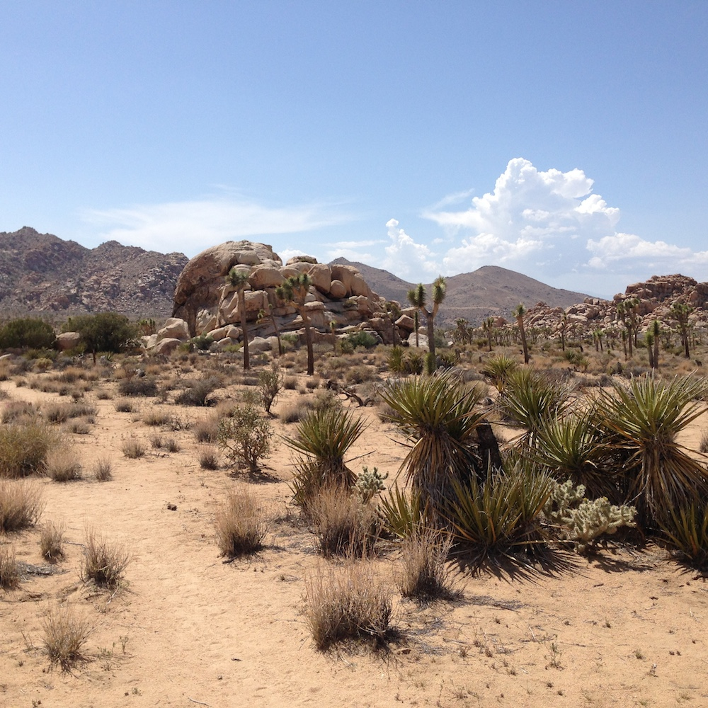 Yuccas, Spanish Daggers and gneiss.
