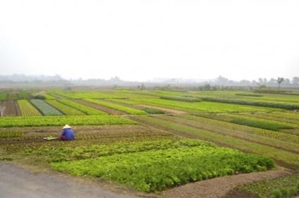 Vietnam farm
