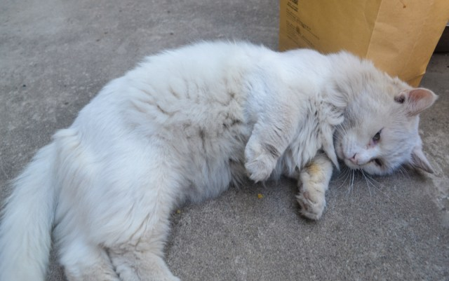 Beijing stray cat