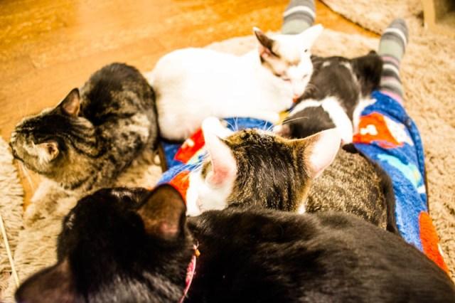 Save Cat Cafe Osaka