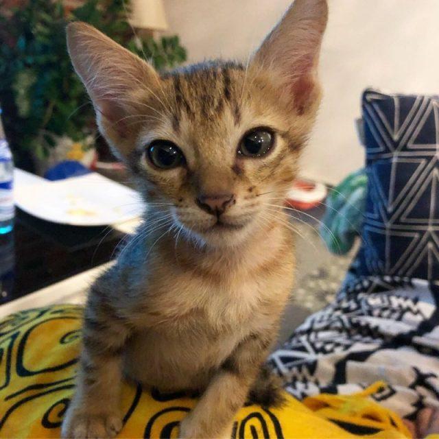 gattino adottivo hoi an