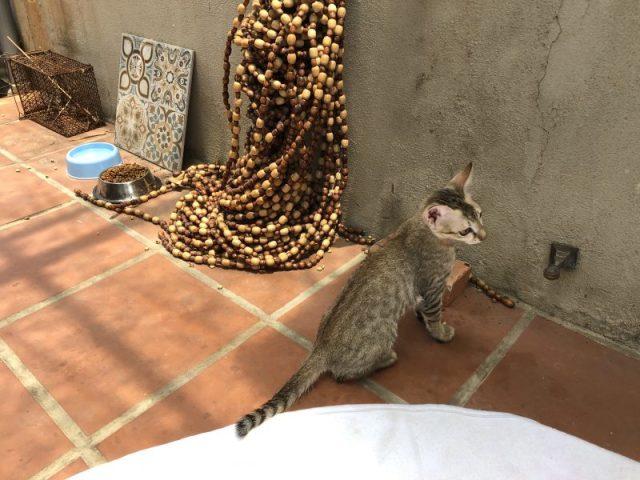 Hub Hoi An Kitten