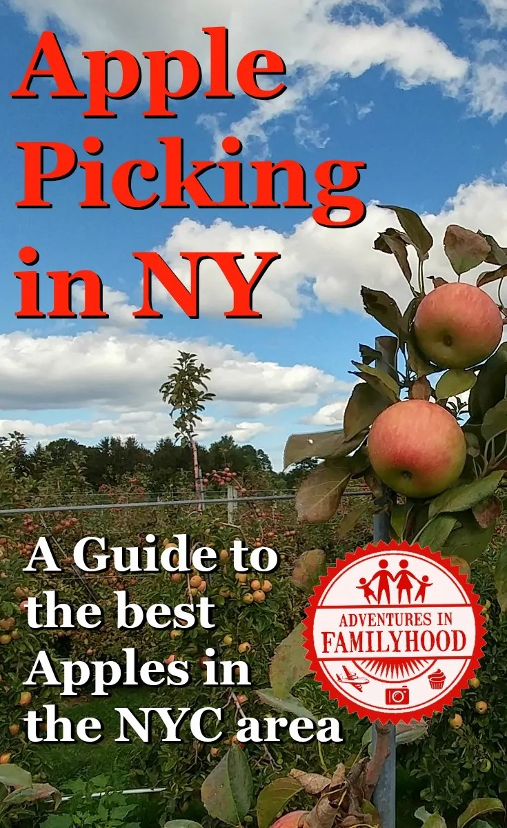 A Guide to the best apple picking in the NYC area