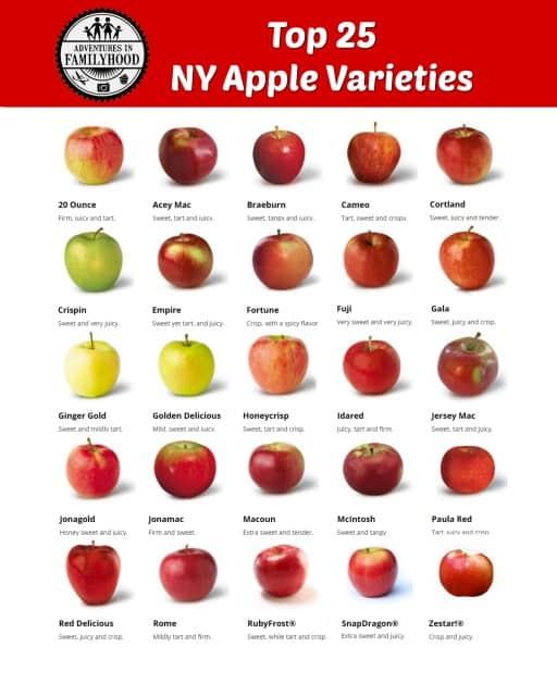 Apple Picking Long Island Ny