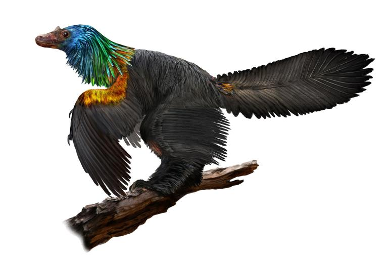 Rainbow-coloured dinosaur the size of a duck discovered in China