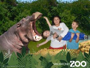 Green screen area hippo photo op San Antonio zoo photo package