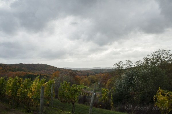 A Trip to the Dutchess County Wine Trail @PennySadler 201