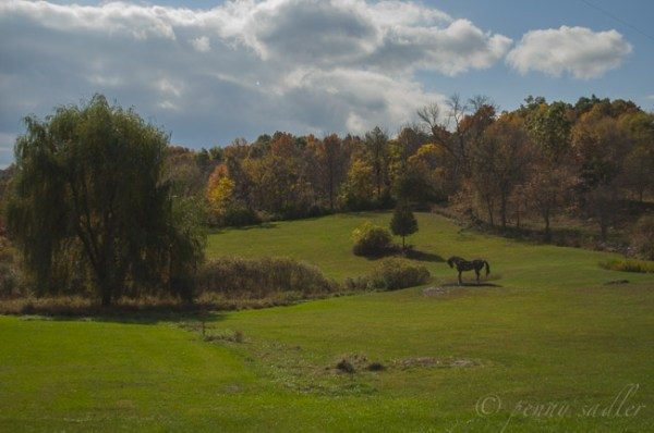 A Trip To Dutchess County Wine Country @PennySadler 2014