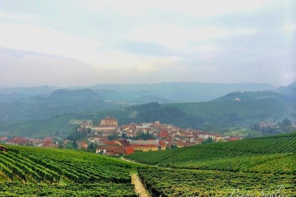 Postcard from Barolo Vineyard in Piemonte, Italy