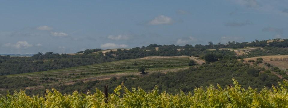 The Wine Road Leads To Lodi, California