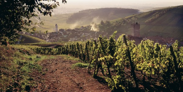 A consumers guide the wines of Alsace France