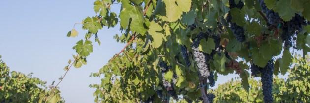 The Wine Abides: m2 Wines, Lodi