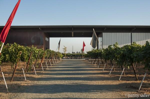 The Wine Abides, Lodi