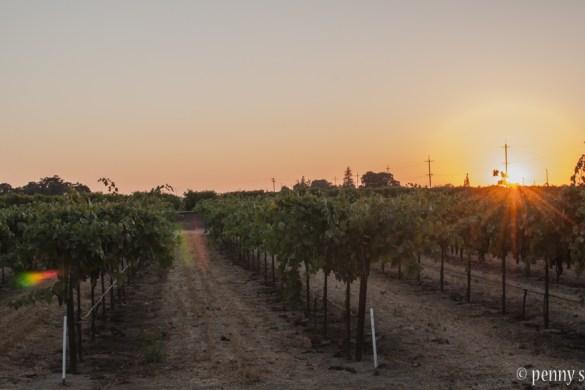@PennySadler 2016 Lodi, CA sunset