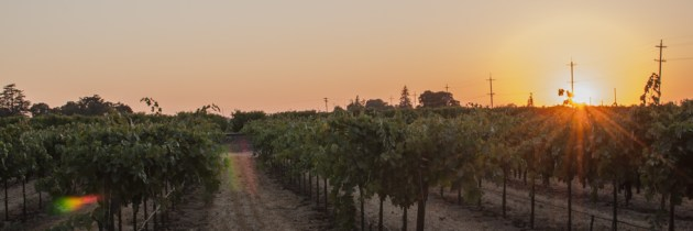 Wine Bloggers Meet in Lodi, California Wine Region