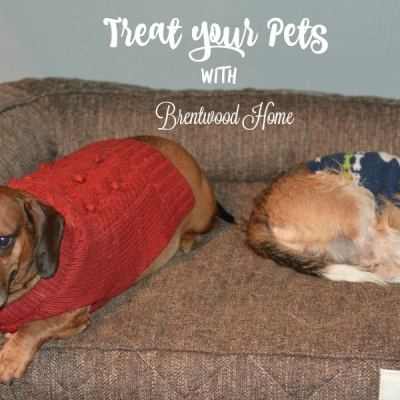 Treat your pets with Brentwood Home Review/Giveaway