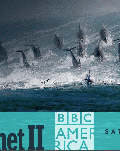 DISH offers BBC's Blue Planet II in 4K