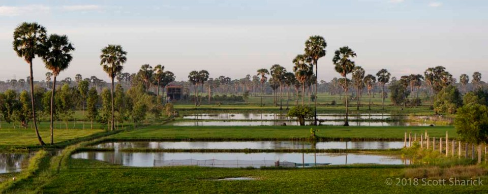Early morning mist across the rice fields and palm trees near Skun, Cambodia.