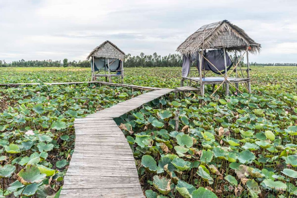 Two minimal huts along a wooden walkway in the lotus fields of Vietnam
