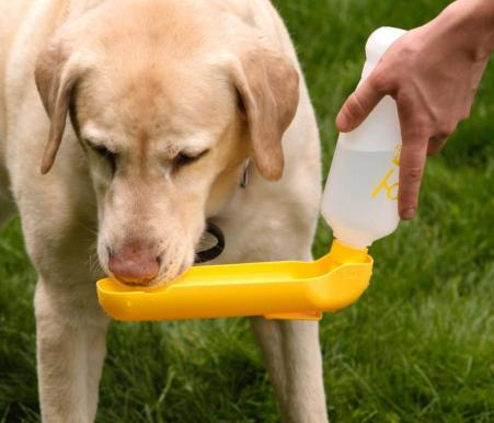 water bottle and bowl for pet