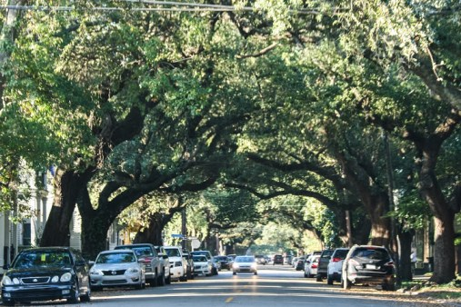parking in new orleans during mardi gras can be a pain! Learn the best spots along with other great mardi gras tips over at adventuresofb2.com