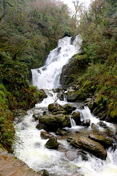Hike to the torc waterfall in Ireland and enjoy the tranquility of nature. A beautiful stop along the way around the Ring of Kerry. - Adventuresofb2.com