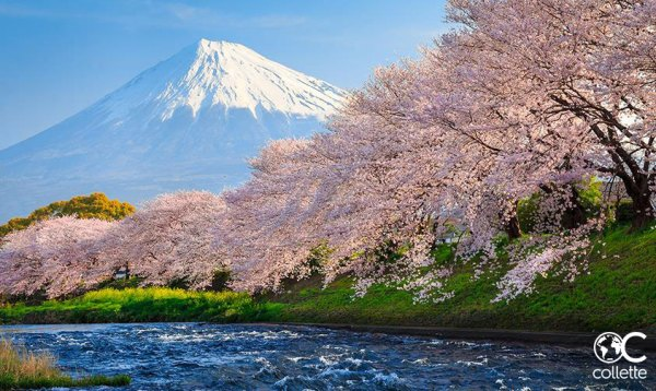 Japan with Collette Travel