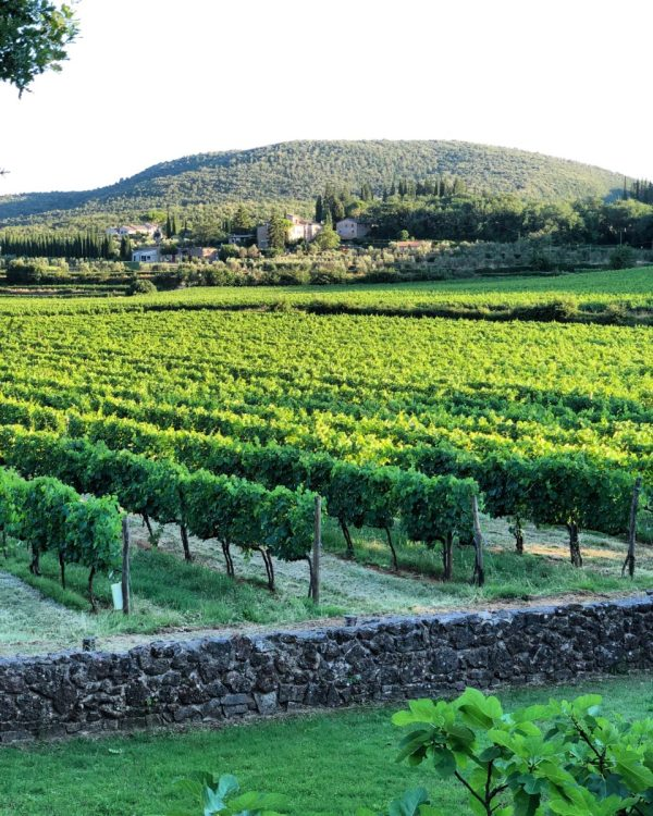 OUr vineyard on our trip to Tuscany