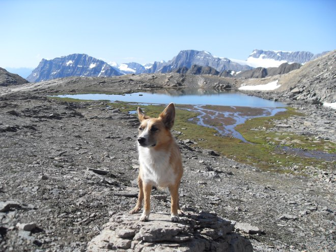 "Lupe E of ""Gnat Pond"" at the base of Cirque Peak. This photo looks W and shows a portion of the Crowfoot Glacier."