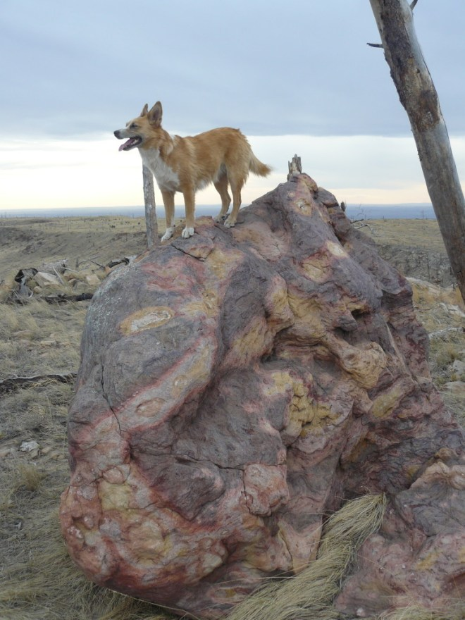 Lupe on the magnificently colored boulder on top of the W high point not far from the lookout tower.