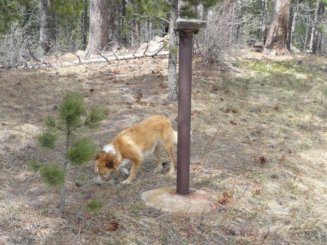 "Lupe near the summit of ""Fake Anchor Hill"". SPHP recognized this pipe with a block of wood on it from when Lupe was here on Expedition No. 122."