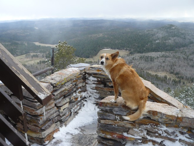 Lupe on the rock wall at the ranger tower on Custer Peak. Photo looks SW towards snow squalls sweeping the region. Lupe was most anxious for SPHP to get some sense and head down out of the N wind.