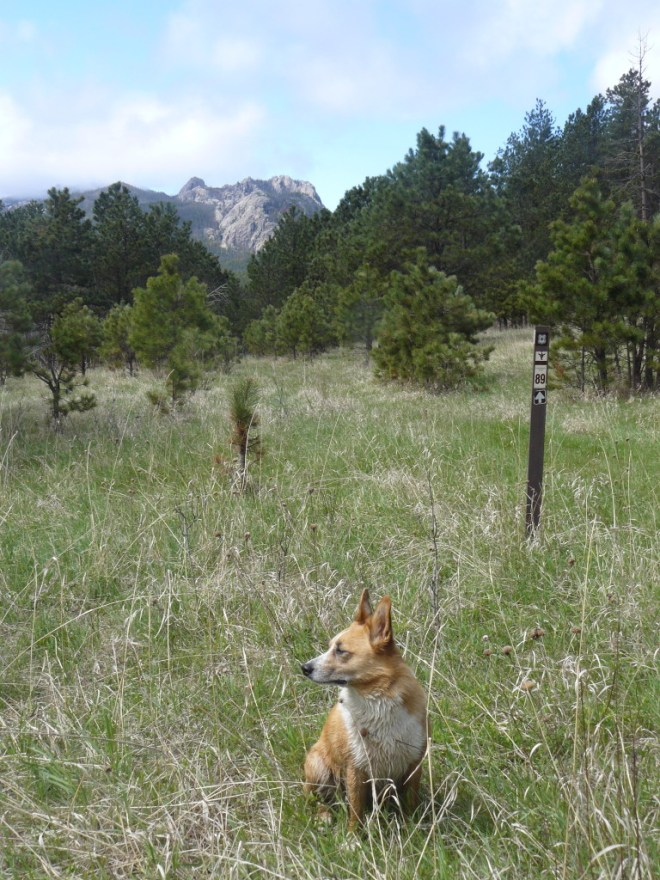 Lupe in the field beyond the little pass. Granite outcroppings in the Black Elk Wilderness visible in the distance.