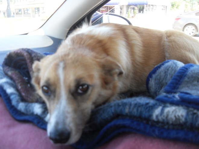 Lupe waits in the G6 for SPHP to get a move on! Dingo vacations are supposed to get off to an early start!