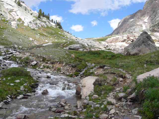 The stream coming down from Albino Lake on its way to Becker Lake. Photo looks N.