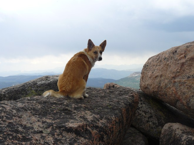 Lupe on Lonesome Mountain 8-3-14